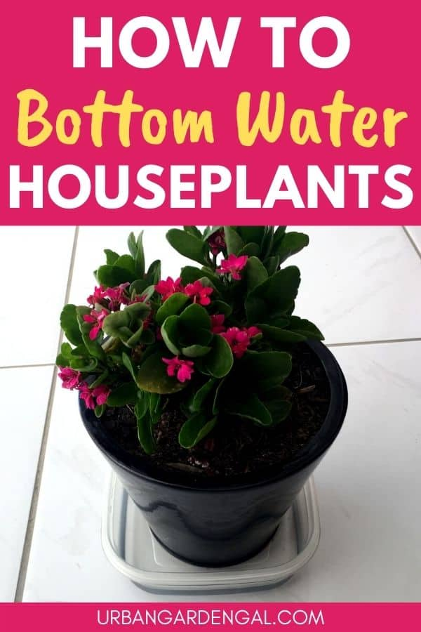 bottom watering plants