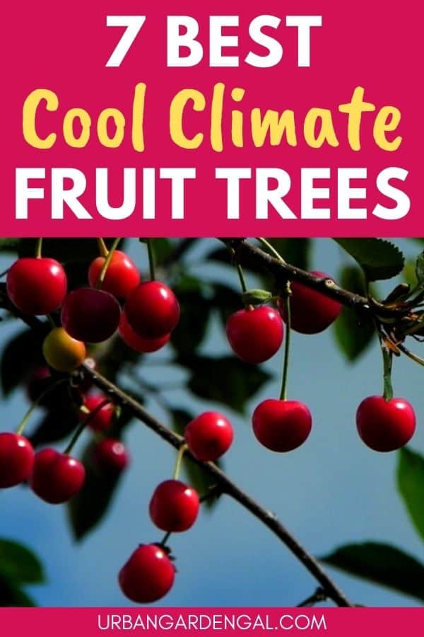 best cold climate fruit trees