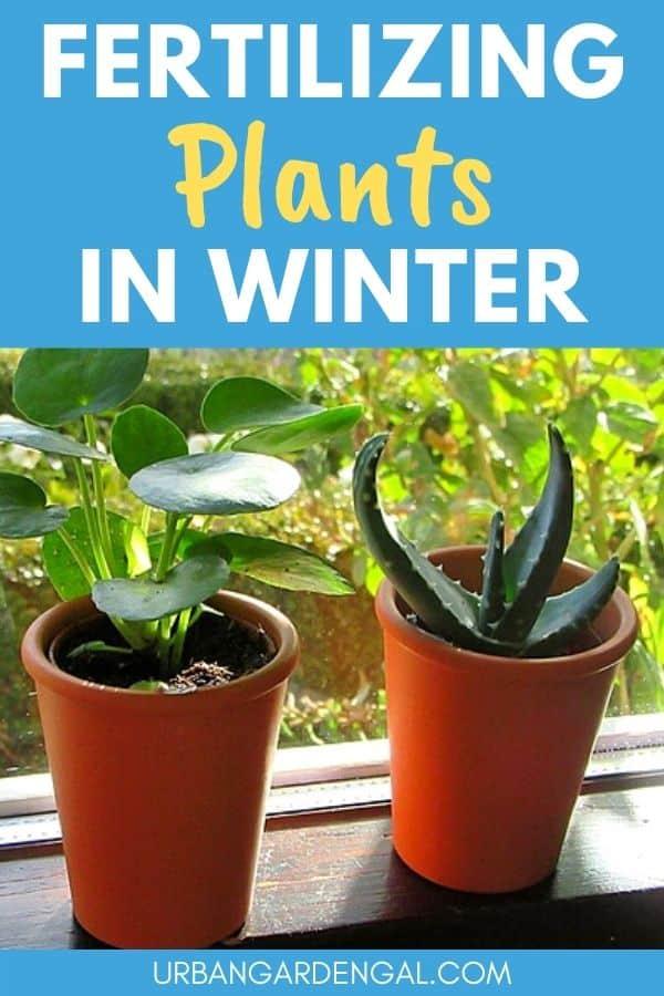 fertilizing plants in winter