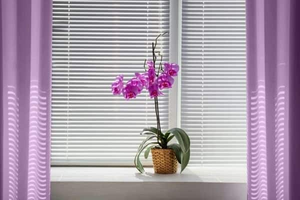 summer houseplant care