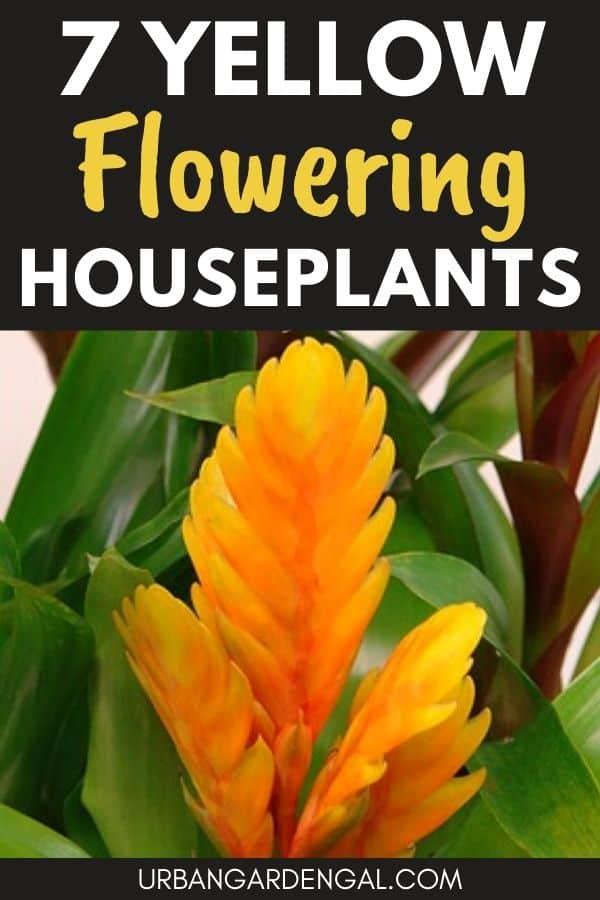 yellow flowering indoor plants