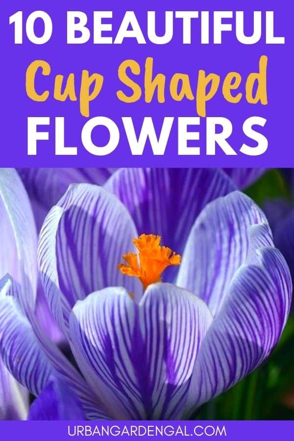 bowl or cup shaped flowers