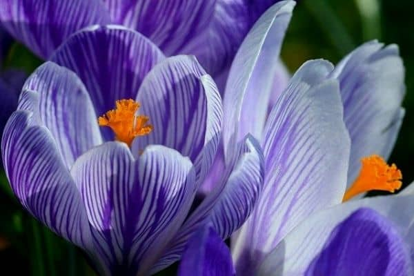 10 Beautiful Cup Shaped Flowers