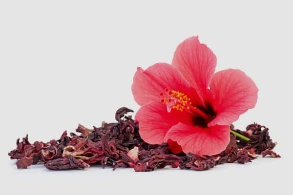 How To Dry Hibiscus Flowers