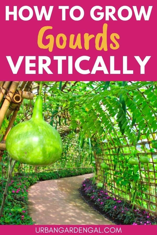 growing gourds vertically