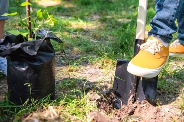 Read more about the article How To Grow Tree Saplings