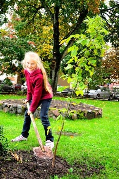 planting a sapling tree