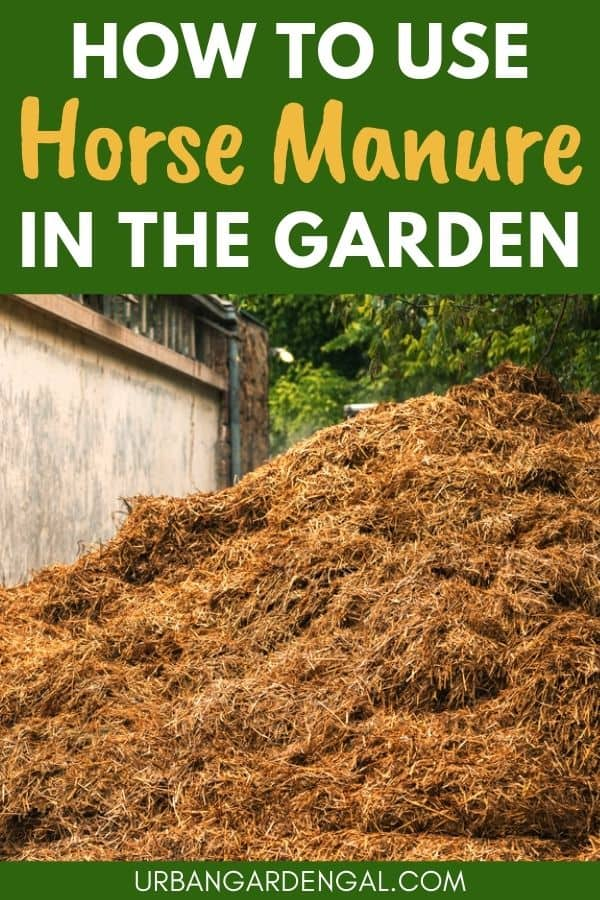 using horse manure in the garden