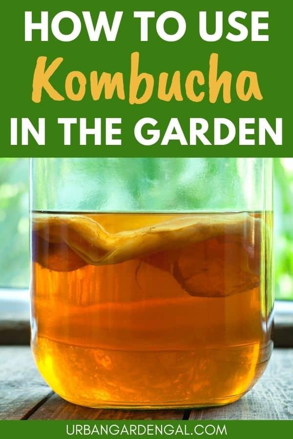 kombucha plant fertilizer