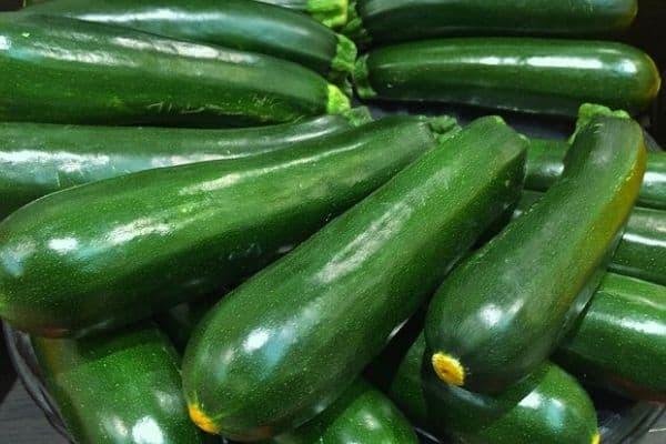 harvesting zucchinis