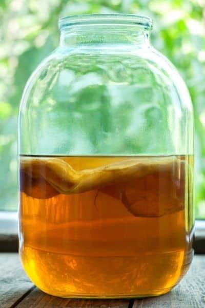 kombucha tea fertilizer