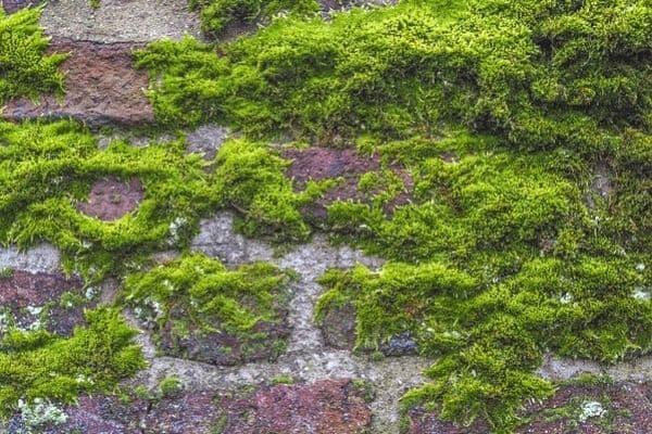 growing moss with yogurt