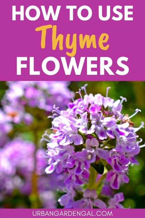 using thyme flowers