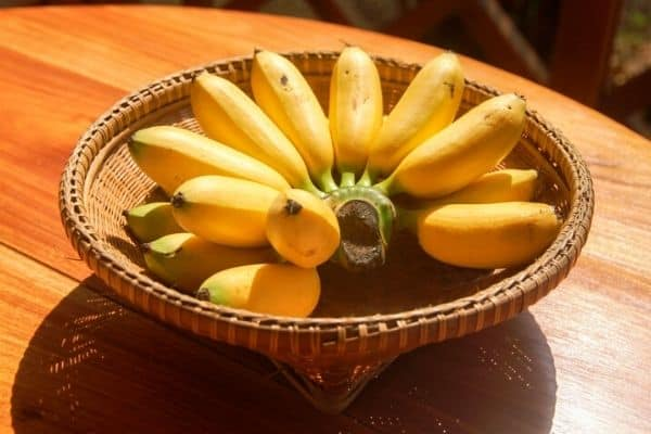 lady finger bananas in a bowl