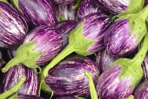 Read more about the article How To Harvest Eggplants
