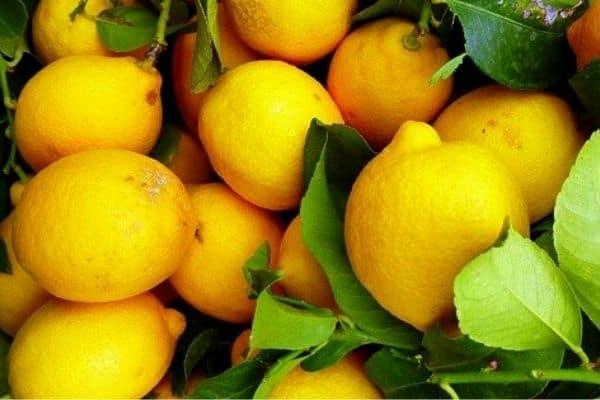 storing lemons