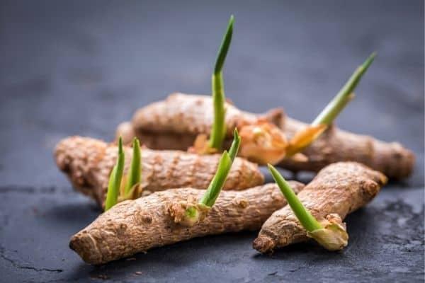 turmeric rhizomes